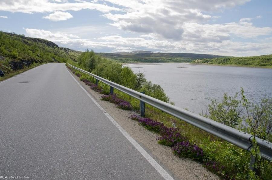 Roadside and River Teno